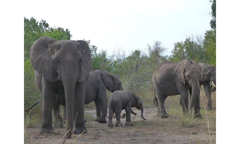 Big mammals at higher risk of extinction in world's poorest countries, study reveals