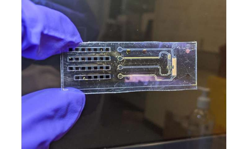 Bioelectronic device achieves unprecedented control of cell membrane voltage
