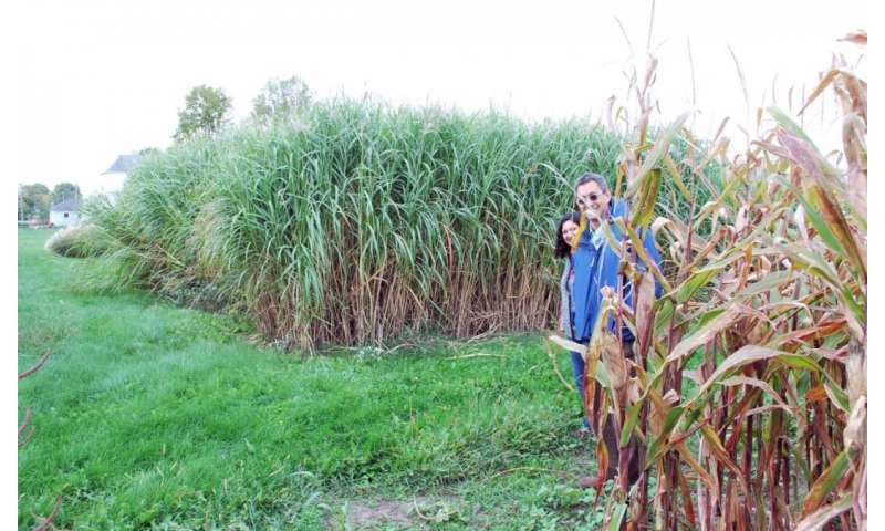 Bioenergy research team sequences miscanthus genome