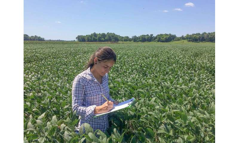 Biological control agents can protect soybeans from Sudden Death Syndrome (SDS)