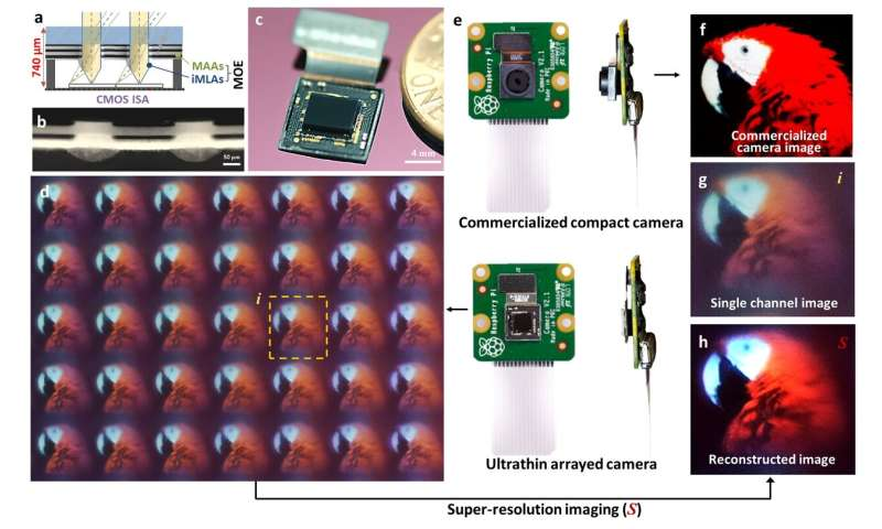 Biologically inspired ultrathin arrayed camera for high-contrast and high-resolution imaging