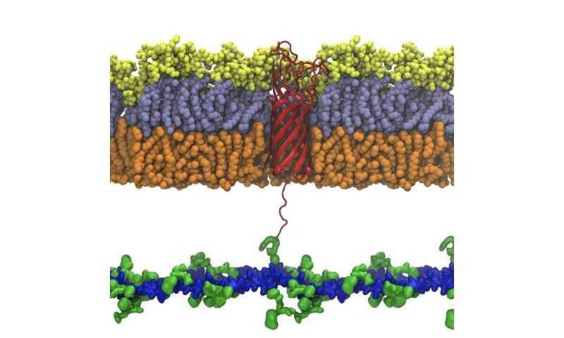 Biology – Bacterial shield breakdown