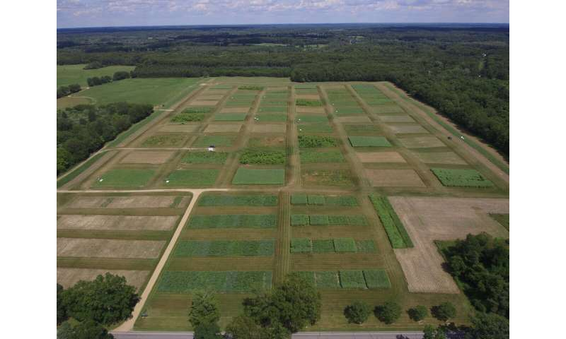 Biomass fuels can significantly mitigate global warming