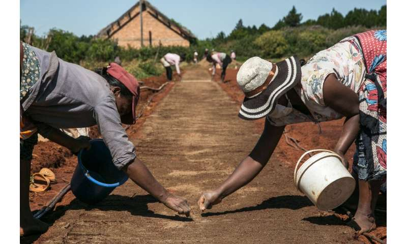 """Bionexx CEO Charles Giblain describes artemisia as a """"weed that can grow anywhere"""". Employees are shown sowing seeds a"""