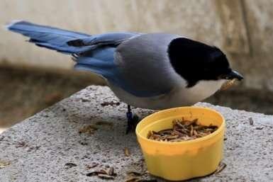 birdssharefo.jpg