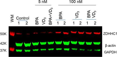 Bisphenol A activates immune response in mice that passes down through generations