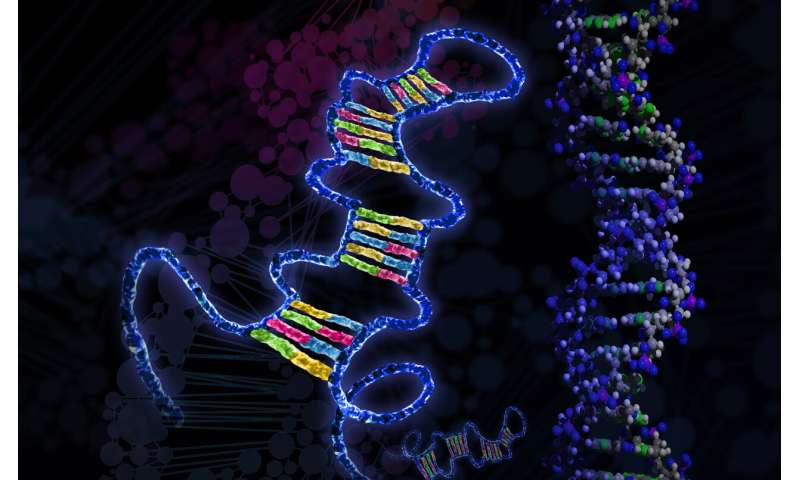 Bits of genetic material called microRNAs may drive metabolic disorders