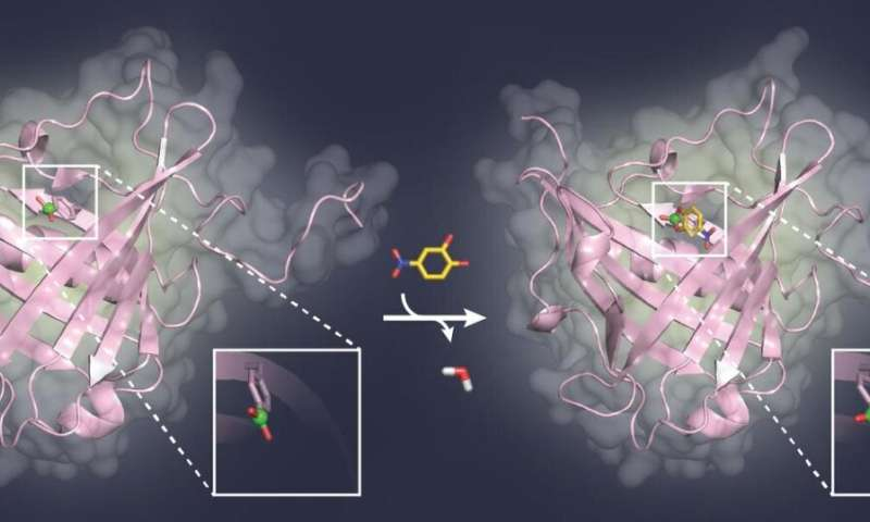 Blocking sugar structures on viruses and tumor cells