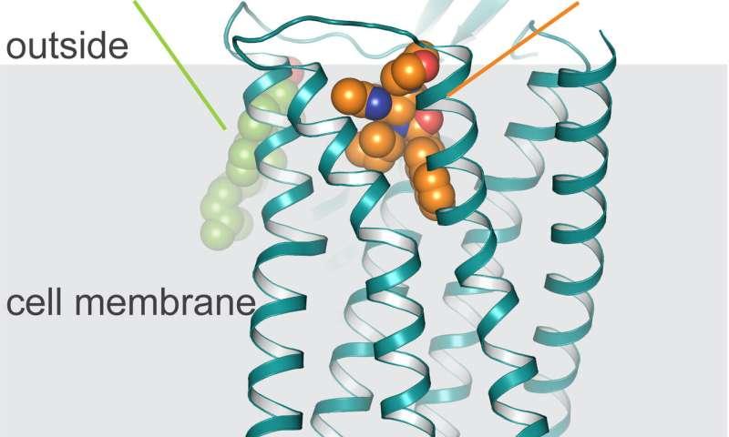 Blueprint of oxytocin receptor facilitates development of new autism drugs