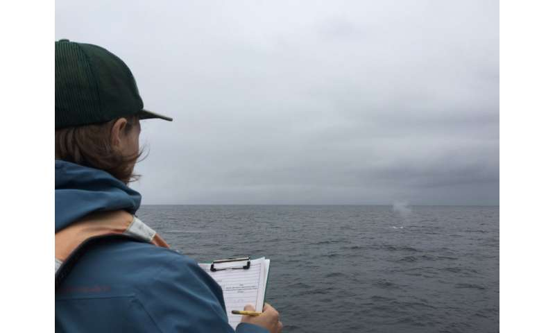 Blue whales change their tune before migrating