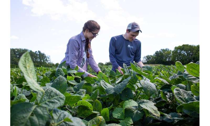 Boost soybean yields by adapting photosynthesis to fleeting shadows, according to model