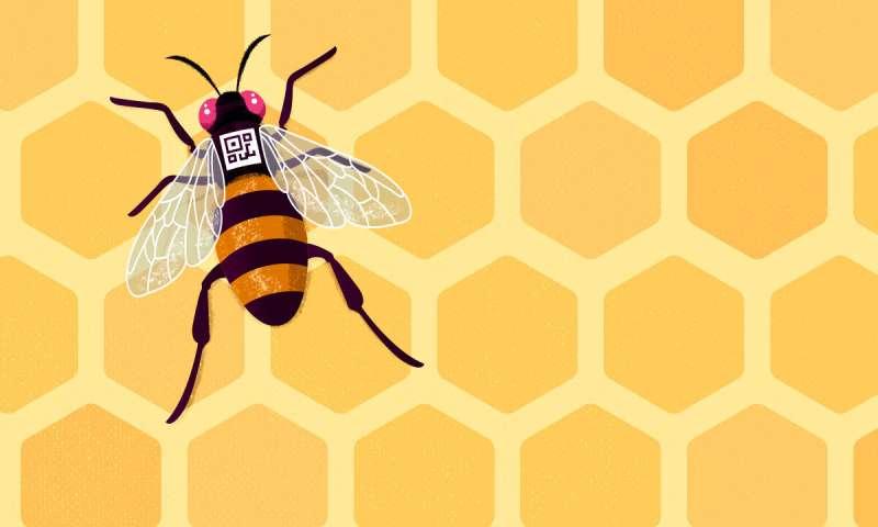 Los patrones de expresión genética del cerebro predicen el comportamiento de las abejas melíferas individuales