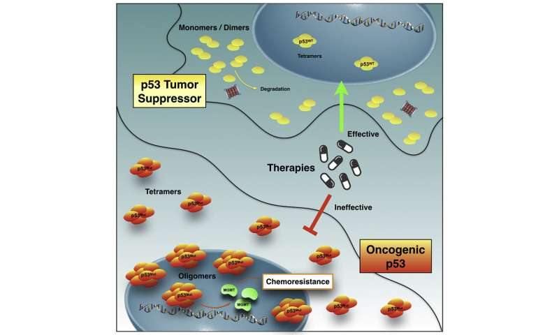 Brazilian scientists unveil chemotherapy resistance mechanism related to p53 mutation