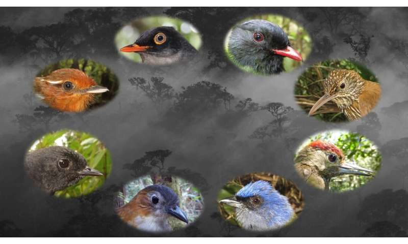 Bright light bars big-eyed birds from human-altered landscapes