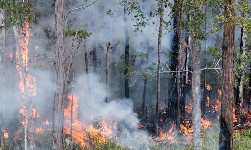 Bushfires release decades of pollutants absorbed by forests