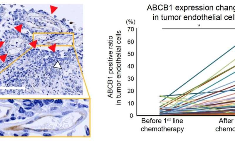 Cancer cells make blood vessels drug resistant during chemotherapy
