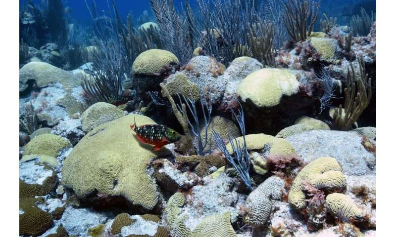 Can pumping up cold water from deep within the ocean halt coral bleaching?