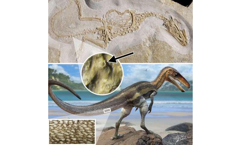 Carnivorous dinosaur had crocodile-like senses