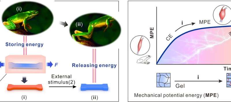 Catapult-like hydrogel actuator designed to deliver high contraction power