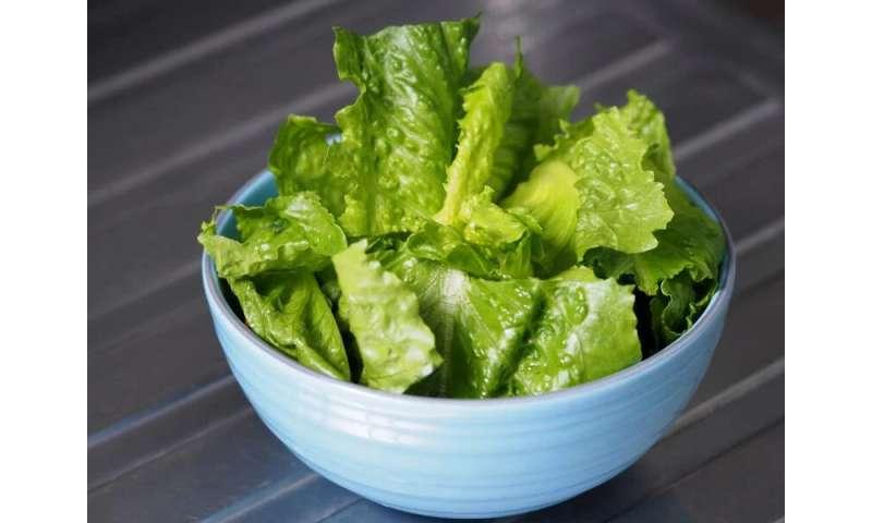 CDC: romaine lettuce <i>E. coli</i> outbreak over