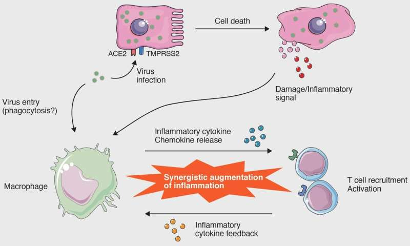 Cellular-level interactions that lead to the cytokine storm in COVID-19