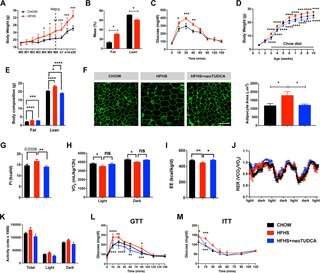 Cellular stress makes obese mothers have obese babies