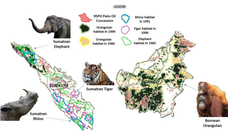 """Certified """"sustainable"""" palm oil replaced endangered mammals habitat and biodiverse tropical forests in the last 30 year"""