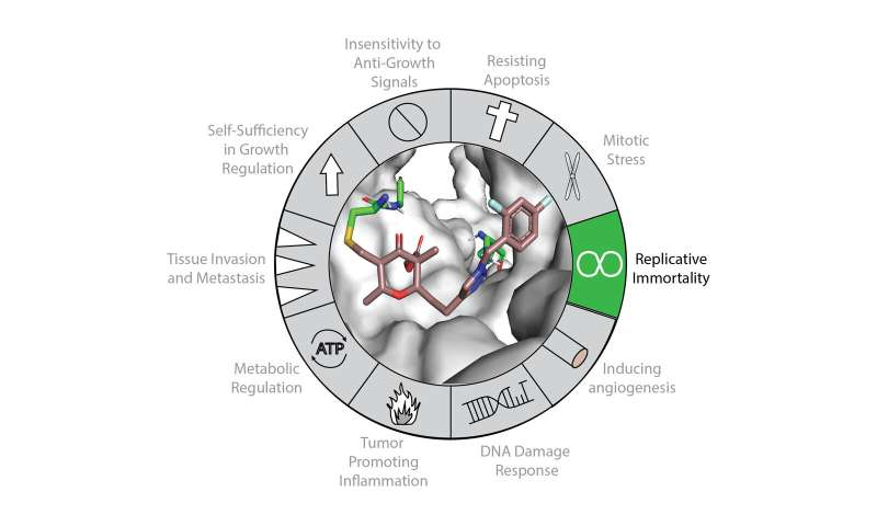 Chemists inhibit a critical gear of cell immortality