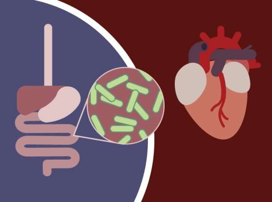 Cholesterol-busting gut bacteria may affect people's cardiac health