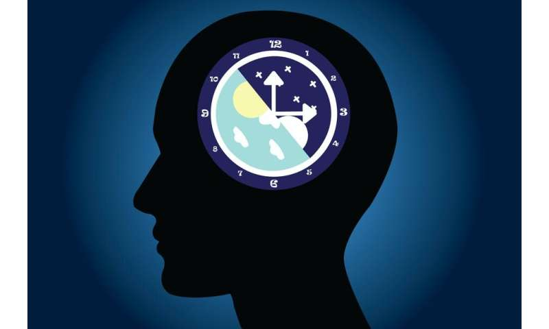 Circadian rhythm: liver gene helps body keep working smoothly after late nights and midnight snacks