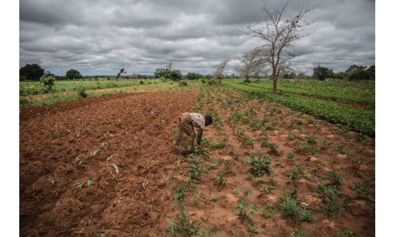 Climate resilience: Small farmer and single mother Imelda Hicoombolwa sows cowpeas and other crops that are less thirsty than co