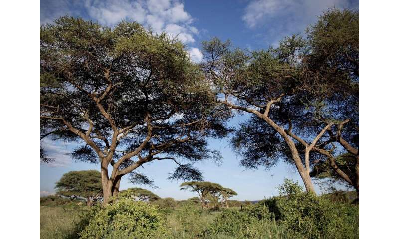 Climate shifts prompt shrubs and trees to take root in open areas