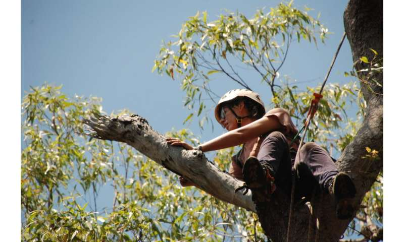 Climbing trees reveals a housing shortage for tree-rats and other endangered animals