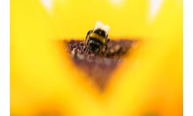 La reproducción de las colonias se redujo entre un 30 y un 45 por ciento con dosis de radiación que antes se consideraban demasiado bajas para impactar insectos