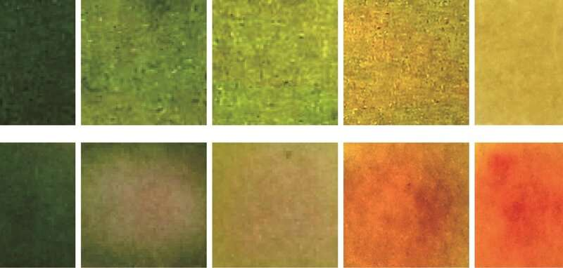 Color-changing bandages sense and treat bacterial infections