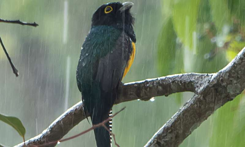 Conceptual model shows why changes in rain may matter more than temperature changes to tropical animals