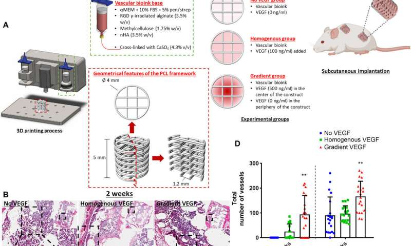 Controlled tissue regeneration with 3-D bioprinted spatiotemporally defined patterns of growth factors.