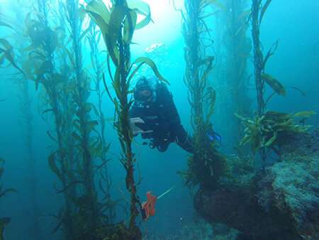 Cooperative research effort documents northward migration of kelp forests
