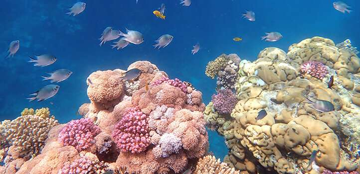 Coral genes go with the flow further than expected