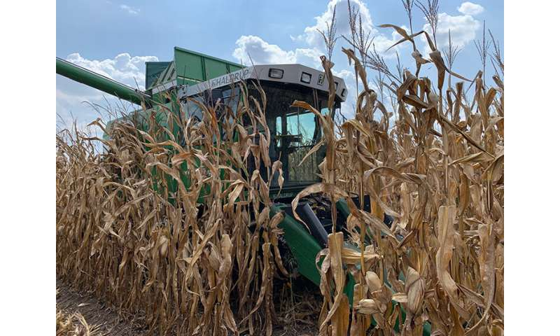 Corn farmers can apply a fungicide just once to protect against foliar diseases
