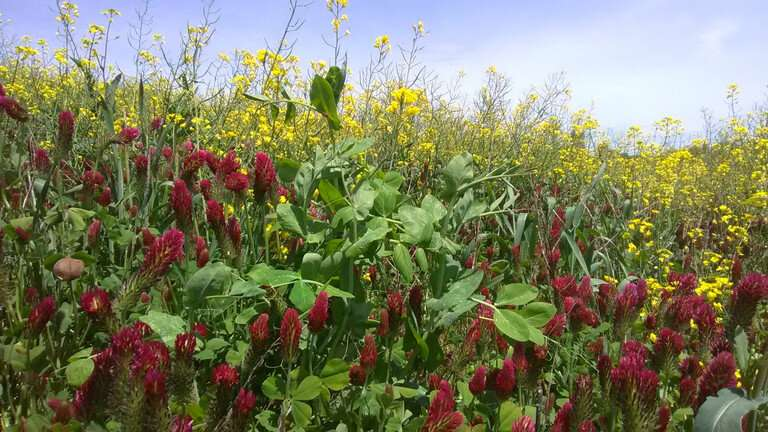 Cover crop mixtures must be 'farm-tuned' to provide maximum ecosystem services
