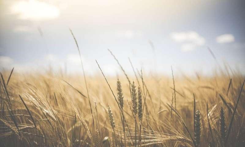 crop farming
