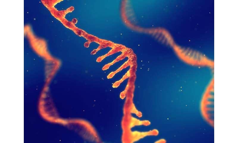 CSIRO unlocks new way to understand evolving strains of SARS-CoV-2