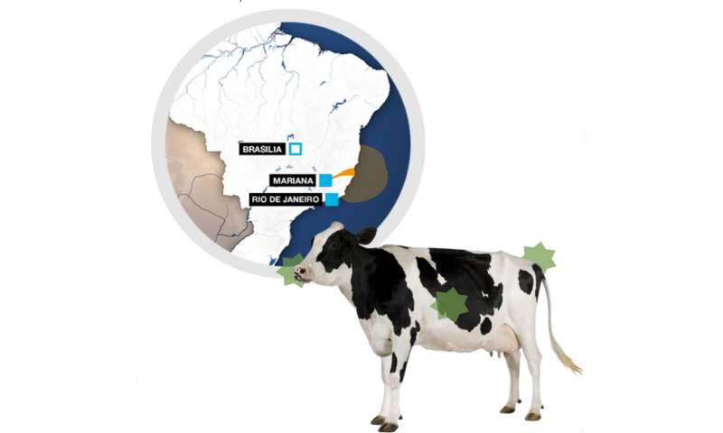 Dairy cows exposed to heavy metals worsen antibiotic-resistant pathogen crisis