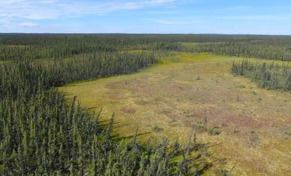 Dal Science study shows that restoration of peatlands can reduce impacts of climate change