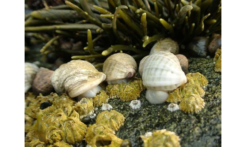 Declines in shellfish species on rocky seashores match climate-driven changes