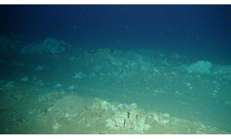 Deep-seabed mining lastingly disrupts the seafloor food web