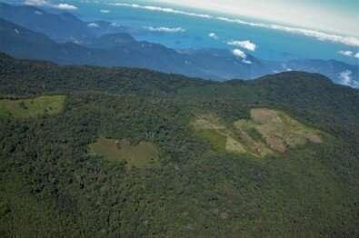 Destruction of an Atlantic rain forest fragment raises the local temperature