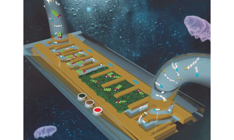 Detecting toxic PFAS with a chip-sized sensor