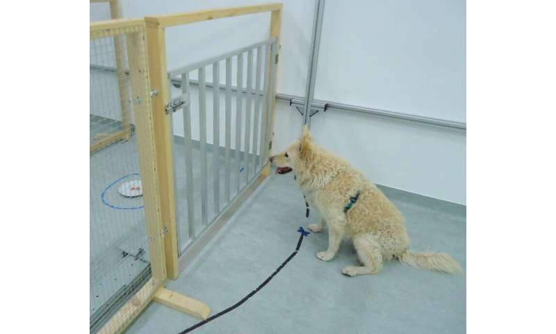 Diet and previous training show no effect on cognitive decline in aging dogs